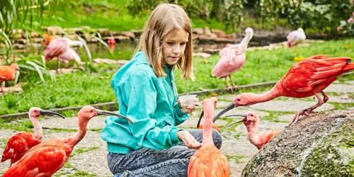 Füttern von Vögeln im Weltvogelpark