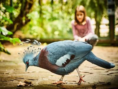 Einer von 4000 Vögeln aus über 650 Arten im Weltvogelpark