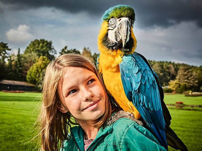 Papagei auf der Schulter einer Besucherin im Weltvogelpark