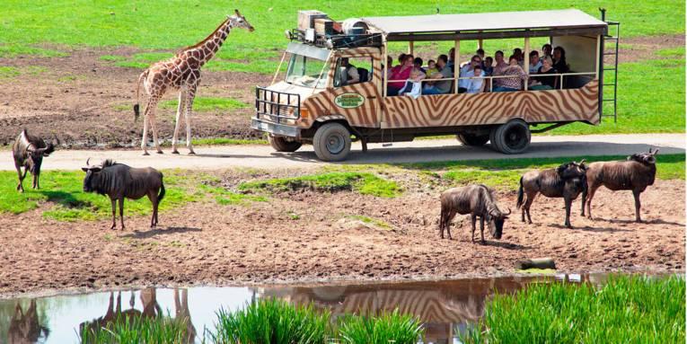 Serengeti-Safari inmitten von wilden Tieren wie Giraffen oder Böcken