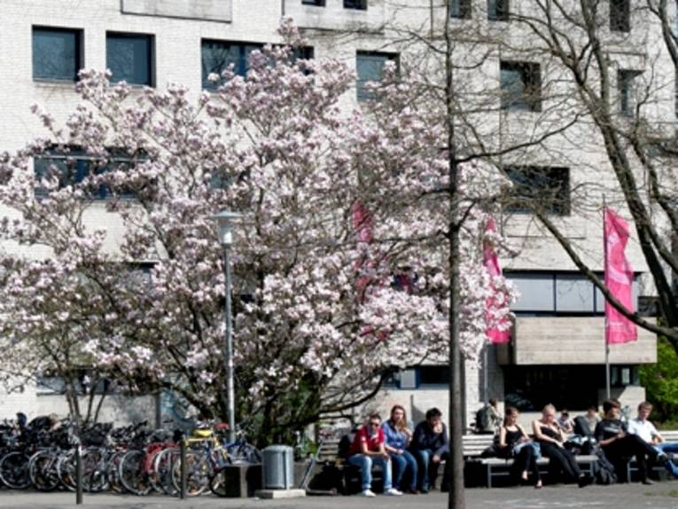 Menschen sitzen auf einer Bank, neben der ein großer Baum steht.